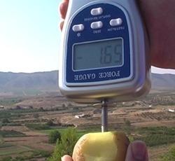 PCE-PTR 200 penetrometer: measuring the firmness of a potato